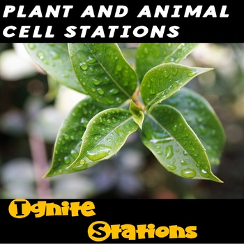 Plant and Animal Cell Station