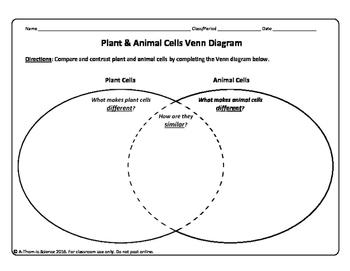 Plant and Animal Cell Venn Diagram