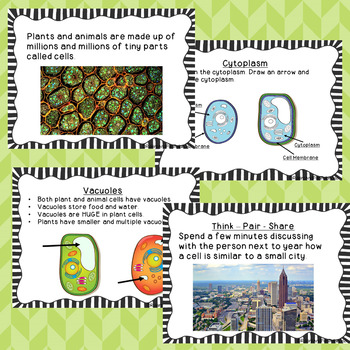 Plant and Animal Cells {Bundle-Lesson, Study Guide, Assessments and more}