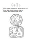 Plant and Animal Cells Coloring Sheet