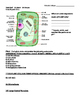 Plant and Animal Cells Guided Notes