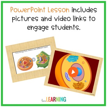Plant and Animal Cells PowerPoint Lesson