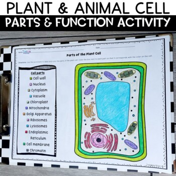 Plant and Animal Cells Part and Function Label and Summarizing Activity