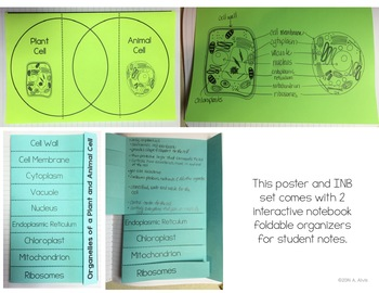 Plant and Animal Cells Posters and Interactive Notebook INB Set