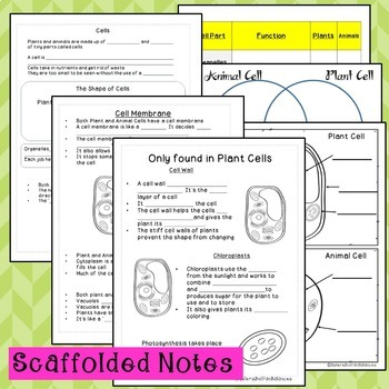 Plant and Animal Cells {PowerPoint Lesson with Note-taking Study Guide}