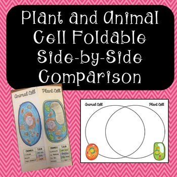 Venn Diagram For Plant And Animal Cells Teaching Resources