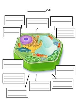 Plant and Animal Cells Structure and Function Manipulative and Diagrams