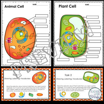 Cells - Plants and Animals  Task Cards