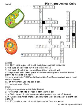 Fine Plant And Animal Cells Vocabulary Crossword Puzzle Freebie Tpt Wiring Digital Resources Inamasemecshebarightsorg