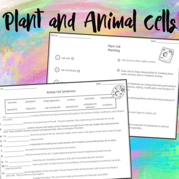 Plant and Animal Cells Worksheets by Dressed In Sheets   TpT