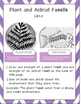 Plant and Animal Fossils LS4.A
