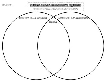 Plant and Animal Life Cycle: Comparing and Contrasting