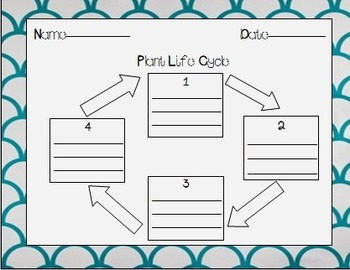 Plant and Animal Life Cycle Graphic Organizer