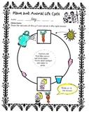 Plant and Animal Life cycle