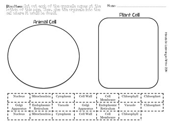 Plant and Animal Organelle Sort