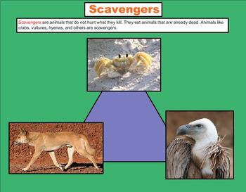 Plant and Animal Roles - A Third Grade PowerPoint Introduction