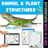 Plant and Animal Structures