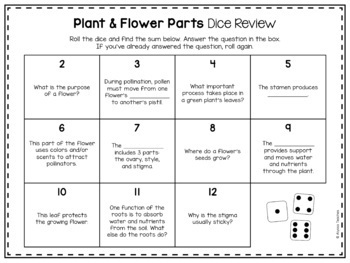 Plant and Flower Parts Dice Review Activity
