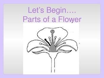 Plant and Flower Parts Power Point