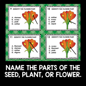 Seeds and Flower Parts Task Cards