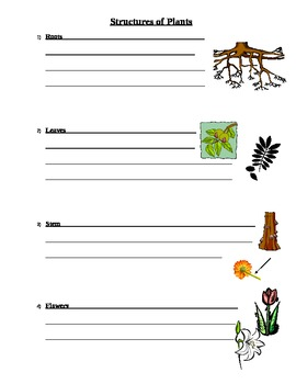 Plant and Flower Power Point Study Guide