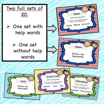Plant and Leaf Structure Task Cards