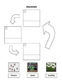Plant and Tree Life Cycle Worksheets!