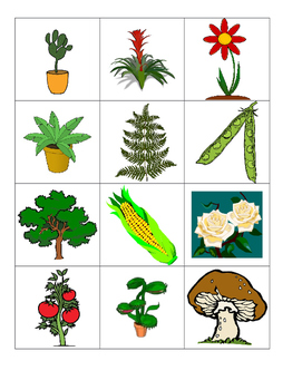 Plant and animal Sort