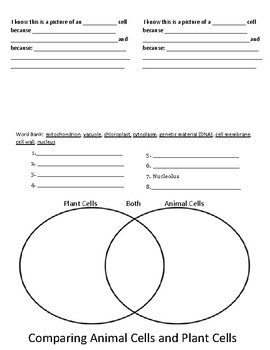 Plant cell and animal cell foldable worksheet for interactive notebook