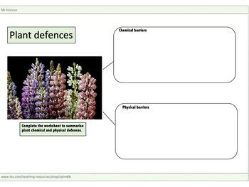 Plant defences worksheet