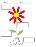 Plant label root, stem, leaves, flower