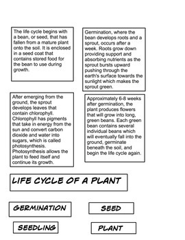 Plant life cycle 2 part cards