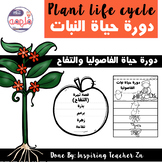 Plant life cycle book - كتيب قصة دورة حياة النباتات (الفاصوليا والتفاح)