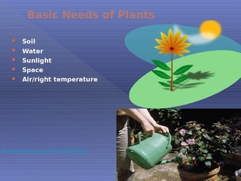 Plant life cycle powerpoint