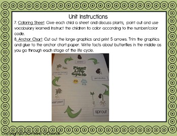 Plant life cycle: teacher book, minibook, anchor chart, craftivity+