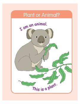 Plant or Animal?