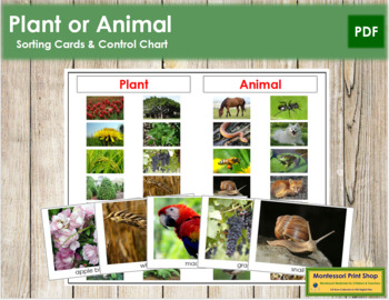 Plant or Animal Cards