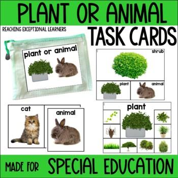 Plant or Animal Task Card Set