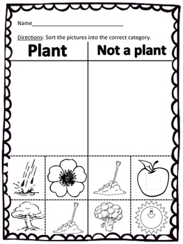 Plant or Not a Plant Sort