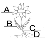 Plant parts and functions Assessment