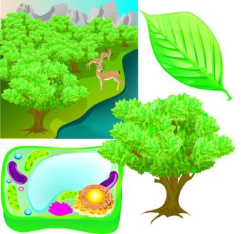 Plant's Biological Levels Of Organization