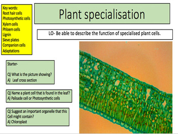 Plant specialisation