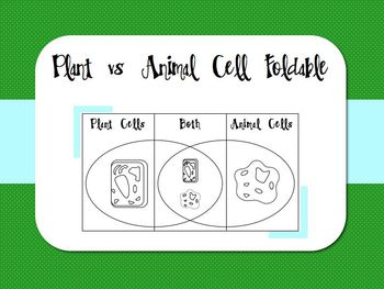 Plant vs Animal Cell Foldable