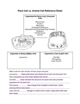 Plant vs Animal Cell Parts