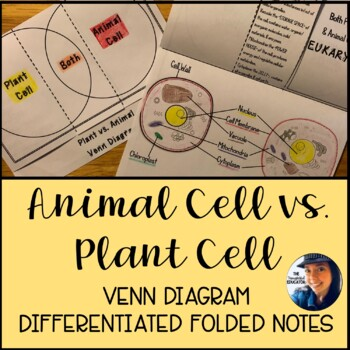 Plant Vs Animal Cell Venn Diagram Differentiated Foldable Notes