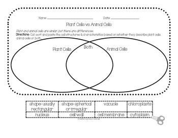 Plant vs Animal Cells Venn Diagram