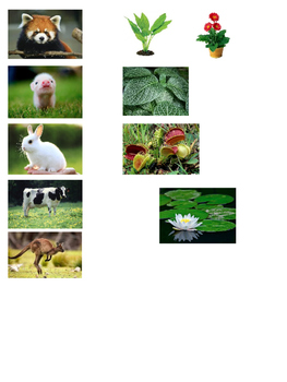 Plant vs Animal Picture Sort