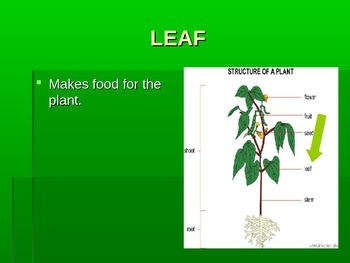 Plant/Flower Structure