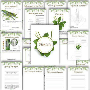 Plantain: Herbarium Project and Teacher's Guide/ Science Outdoors Activities