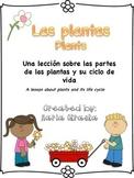 Plantas ~ Plants
